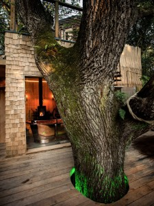 Create-a-Treehouse-in-the-Forests-Design