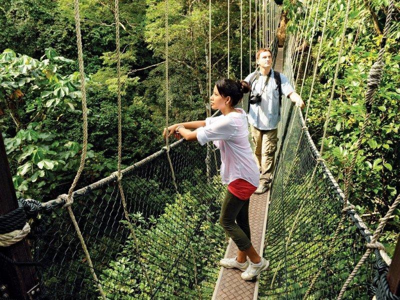 canopy_walk_taman_negara_pahang_e2cabdd0-df75-4bc9-a121-75475ce0c46a_1024x1024