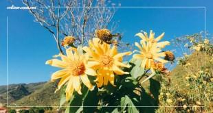 Tháng 11 Đà Lạt đẹp mê mẩn bởi 3 loài hoa dại rực rỡ | VNTOUR