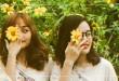 Thổn thức với loài hoa dã quỳ Đà Lạt khi chạm ngõ vào mùa