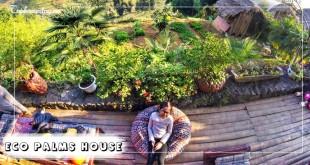 Eco-Palms-House-tophomestay.vn