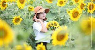 Cánh đồng hoa hướng dương tại Đức Trọng Đà Lạt | VNTOUR